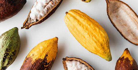 Jak poznat kvalitní čokoládu v pěti krocích